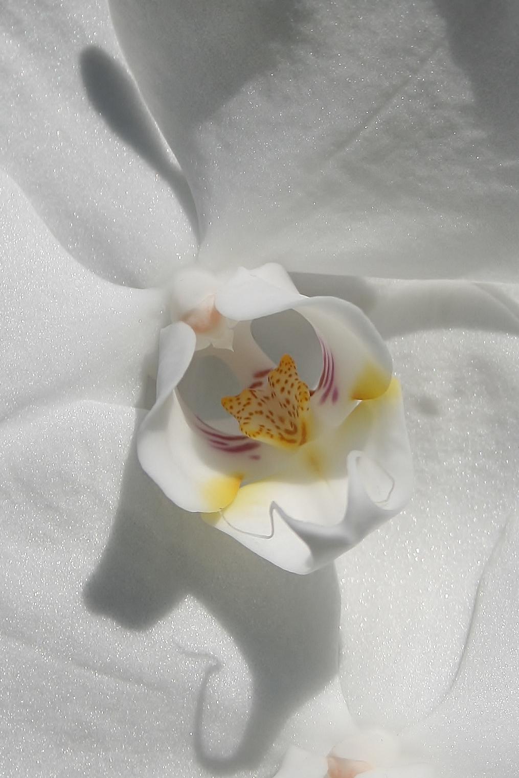 bloemen 076